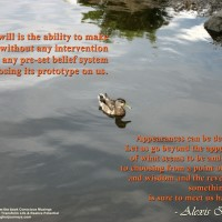 duck_quote