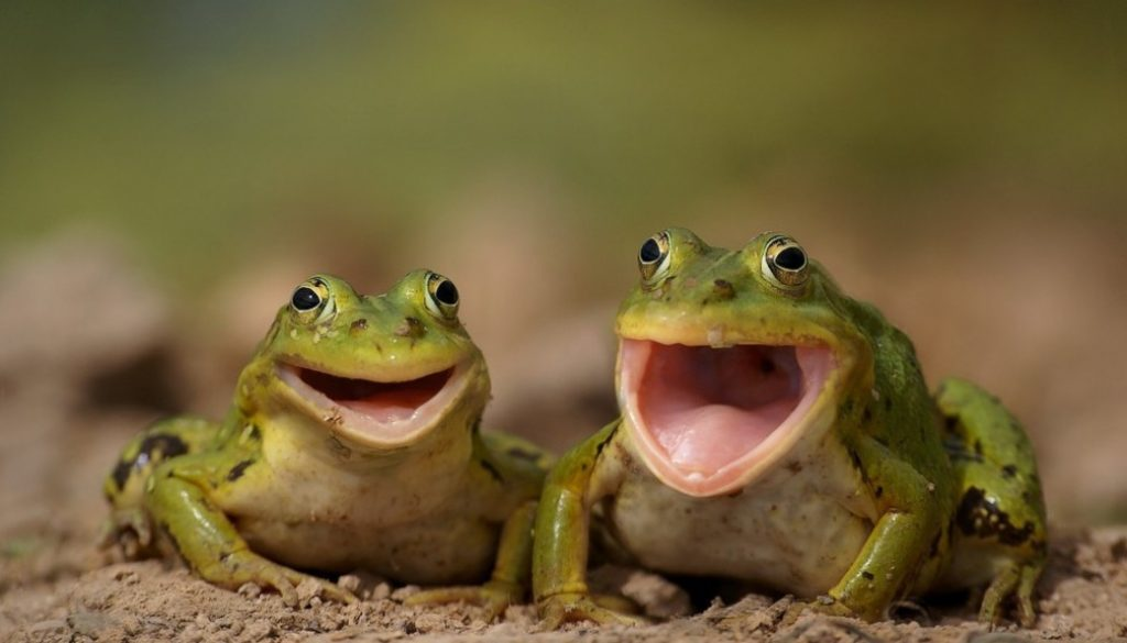 laughingfrogs