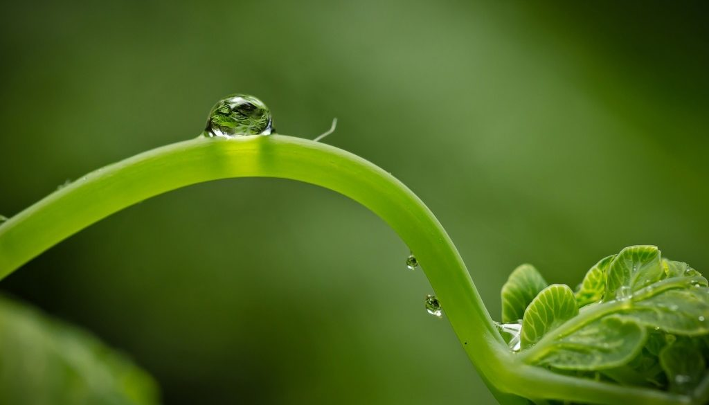 waterdrops_plant
