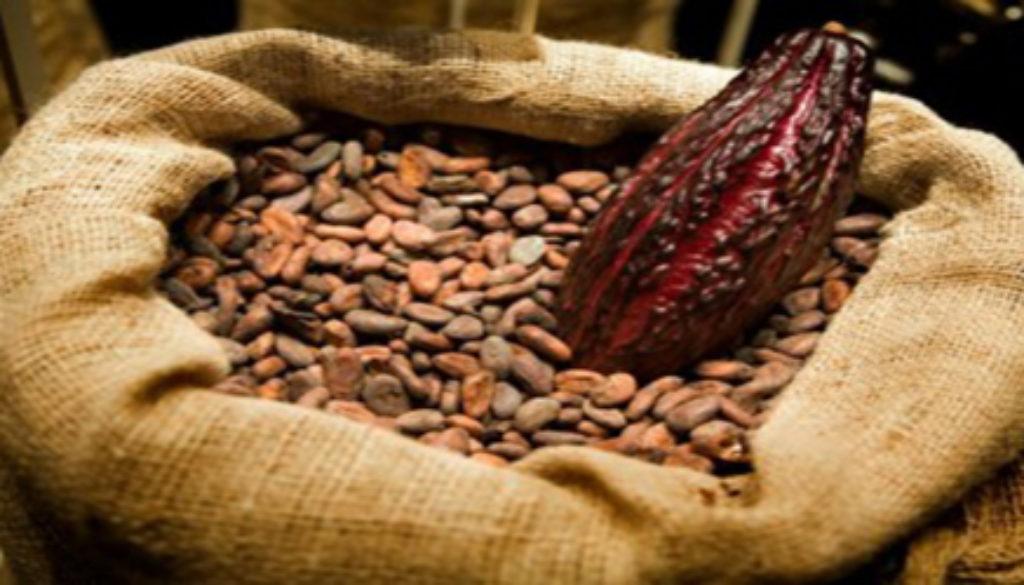 cacao fruit beans e1297715965206