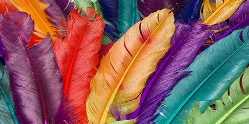 colorfulfeathers