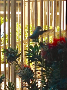 hummingbird synchronicity