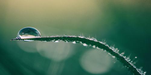 waterdrop_leaf